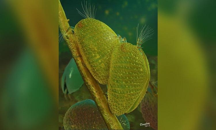Phục dựng cá thể Myanmarcypris hui đực và cái đang giao phối. Ảnh: Dinghua Yang.