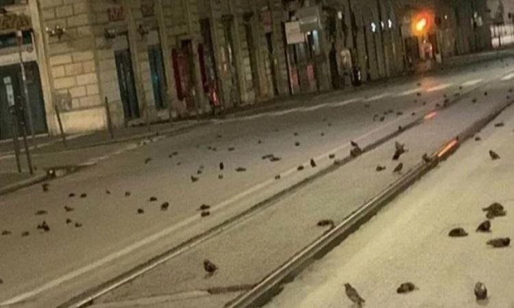 Xác chim rải đầy đường phố Rome. Ảnh: IOPA.