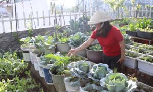 Nuôi gà, trồng rau trong nhà phố Sài Gòn