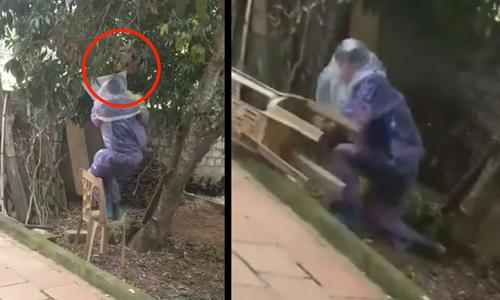 Chó cưng sưng mặt vì chọc phá tổ ong - 11