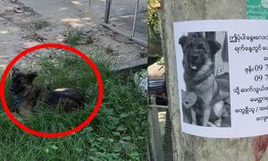 Cún cưng ngồi chờ bên thông báo tìm chó lạc