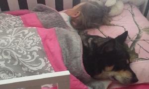 Chó cưng ngủ ngon lành trong cũi em bé