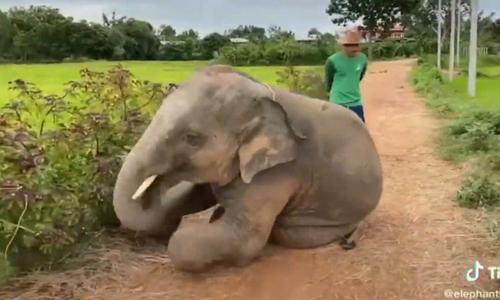 Voi mẹ cao tay xử lý voi con ăn vạ - 1