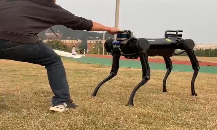 Chó robot Jueying. Ảnh: Đại học Chiết Giang.