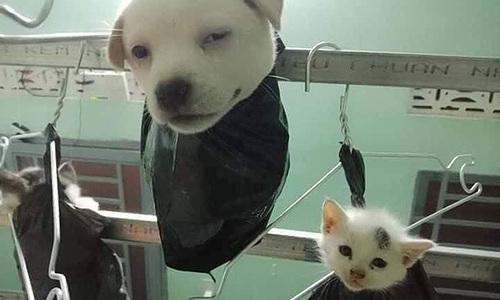 Chó cưng trèo thang trộm trứng gà - 11