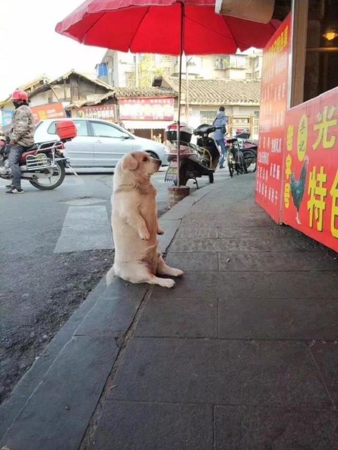 Chó cưng ngồi trước cửa hàng xin ăn - 2