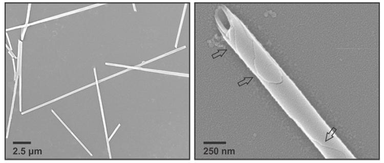 Vật liệu nano sau khi cuộn lại thành dạng ống. Ảnh: Đại học Emory.