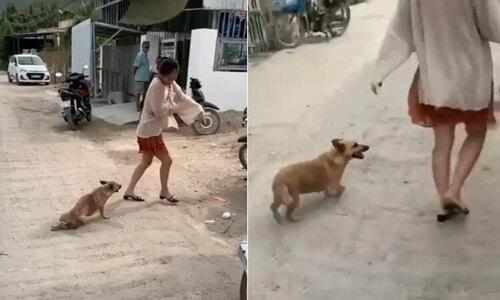 Người đàn ông trượt ngã khi trêu chó - 3