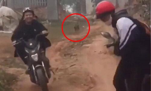 Người đàn ông trượt ngã khi trêu chó - 2