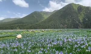 Hệ sinh thái hồi sinh trên dãy Kỳ Liên Sơn