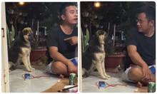 Cún cưng buồn rười rượi vì bị chủ nói xấu