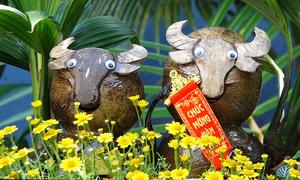 Bonsai dừa tạo hình trâu đón Tết