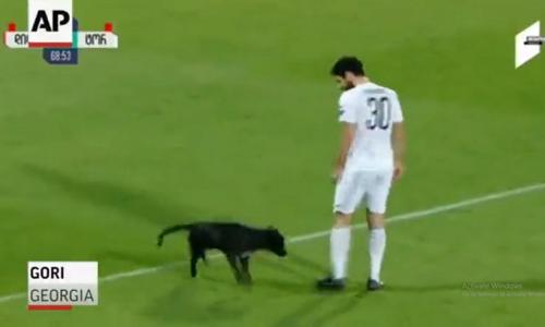 Dừng trận đấu vì chó cưng xỏ giày ra sân - 1