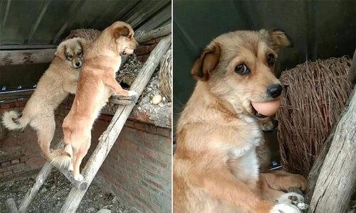 Chó cưng phụ bà chủ lấy nước, xách rau - 2