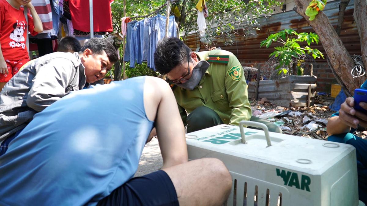 Lực lượng chức năng di dời khỉ đã bắn thuốc mê. Ảnh: Đình Văn.