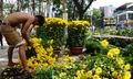 Bán 10 cây vàng buôn hoa, coi chừng mất Tết