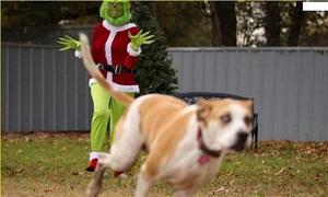 Cún cưng chạy thục mạng vì bị dọa ma