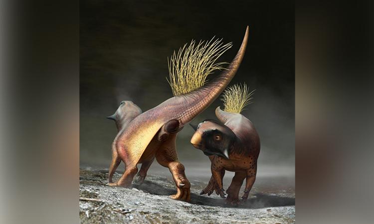 Đồ họa mô phỏng khủng long Psittacosaurus sử dụng lỗ huyệt để thu hút bạn tình. Ảnh: Bob Nicholls.