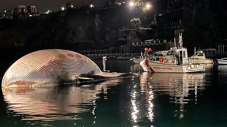 Xác cá voi dạt vào bờ biển Sorrento ở phía nam Italy hôm 17/1. Ảnh: Guardia Costiera.