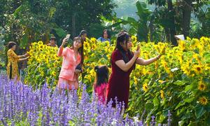Cánh đồng hoa 14.000 m2 ở Sài Gòn hút khách