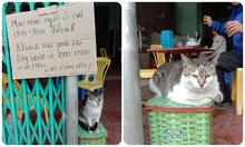 Chủ quán nhờ khách vuốt ve mèo