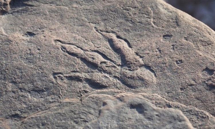 Dấu chân cổ đại chưa rõ của loài khủng long nào. Ảnh: Bảo tàng Quốc gia Wales.