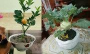 Loạt ý tưởng trang trí 'cây nhà lá vườn' dịp Tết