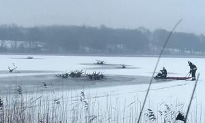 Hươu chết đuối tập thể dưới hồ đóng băng