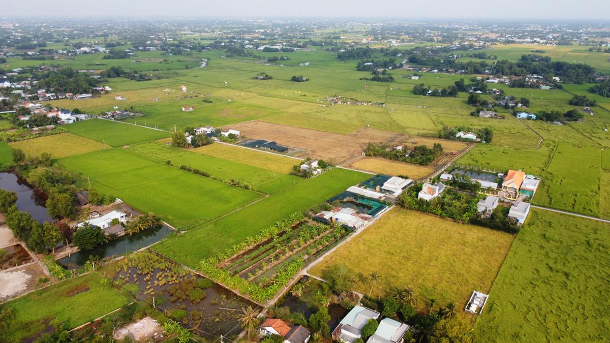 Cánh đồng lúa Nàng Thơm Chợ Đào 53 ha trồng theo quy trình Viet G.A.P tại Mỹ Lệ, Cần Đước nhìn từ trên cao. Ảnh: Hoàng Nam