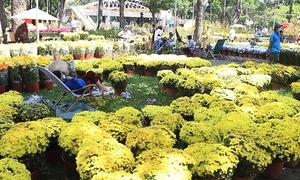 Chợ hoa Sài Gòn ế ẩm ngày cận Tết