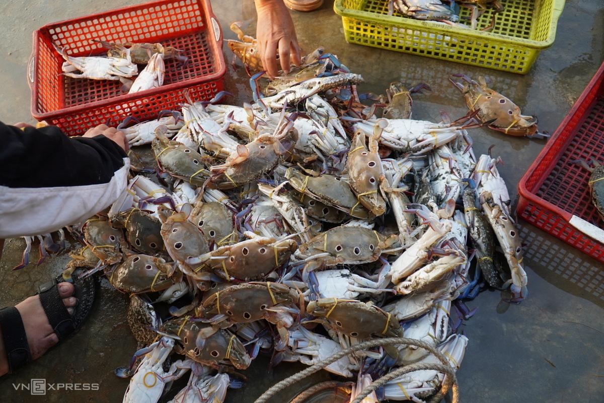 Ghẹ sống loại lớn bán tại bến Cầu Tàu (Phan Thiết) giá 35.000 đồng một ký. Ảnh: Việt Quốc.