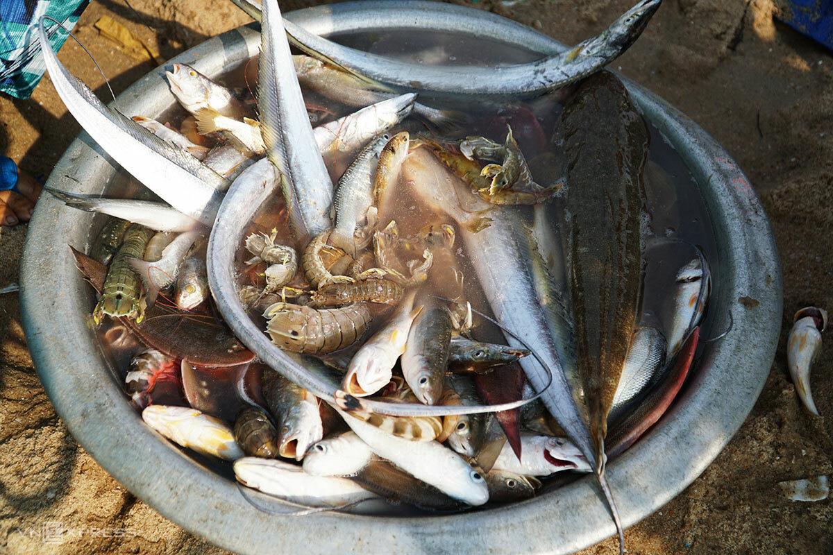 Một phần hải sản ông Lưỡng bắt được. Ảnh: Trường Hà.