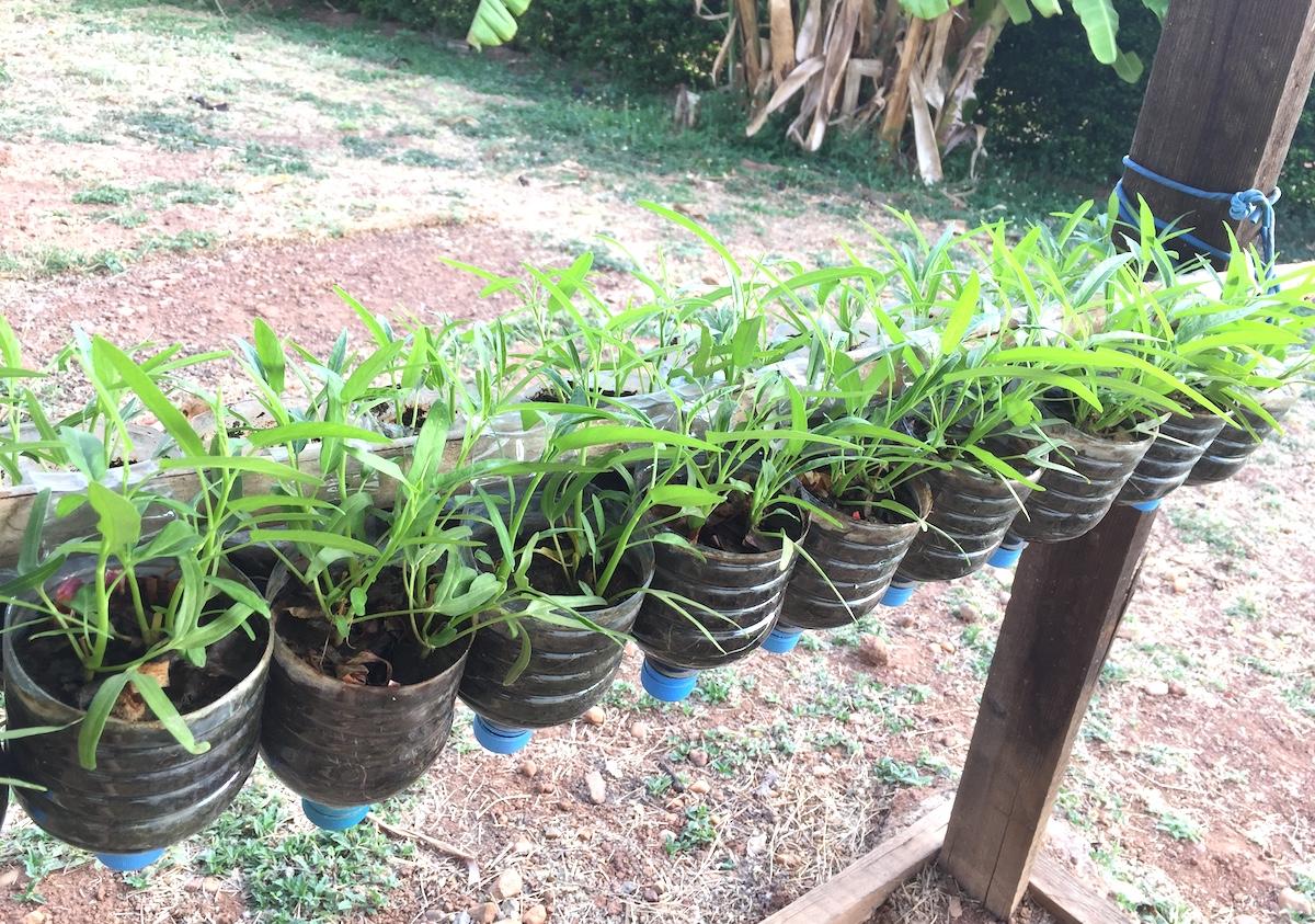 Một góc của vườn treo rau muống của trung tá Lê Ngọc Sơn. Ảnh: Phương Mai