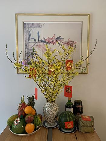 'Mai vàng' Forsythia chưng Tết. Ảnh: Nguyễn Đăng Anh Thi.