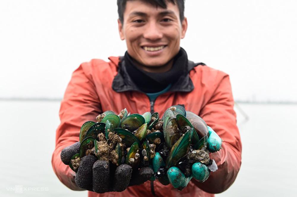 Vẹm xanh sinh sống dưới đáy sông Yên thường rất béo, có thể chế biến thành nhiều món ăn bổ dưỡng như hấp, nướng mỡ hành, nấu canh hay cháo... Ảnh: Lê Hoàng.