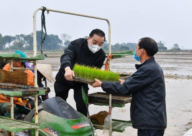 Chủ tịch UBND TP Hà Nội Chu Ngọc Anh xuống đồng cấy lúa cùng nông dân sáng 19/2. Ảnh: Viết Thành