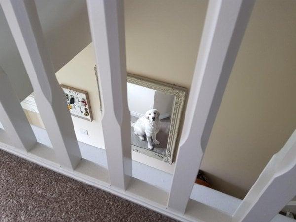 Chó cưng nhìn trộm tôi qua gương.