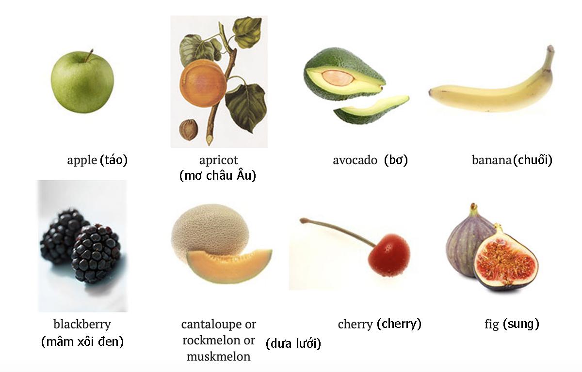 Tên 24 loại quả trong tiếng Anh