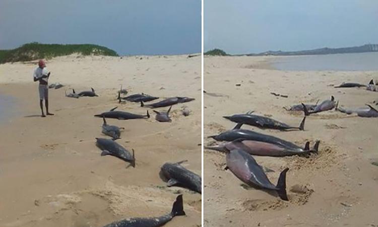 Cá heo chết hàng loạt trên bờ biển Mozambique. Ảnh: Zientek Mary.
