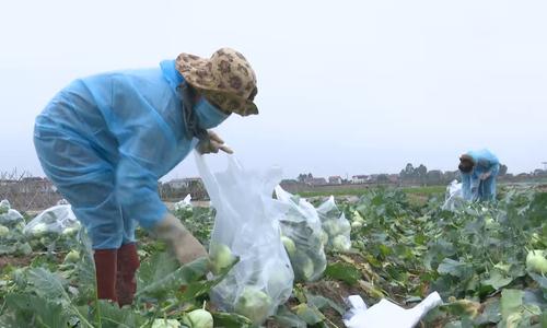 Khử khuẩn nông sản cần giải cứu của Hải Dương