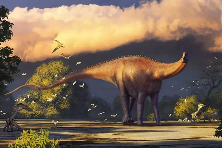 Hình ảnh phục dựng loài khủng long Dzharatitanis kingi. Ảnh: Alexander Averianov.