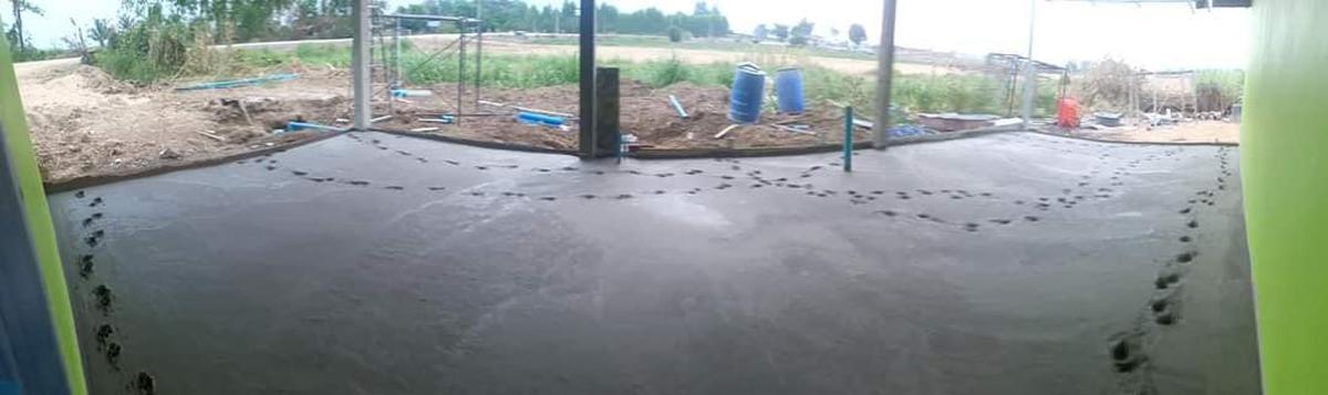 Chó cưng chạy trên nền bê tông mới đổ - 8