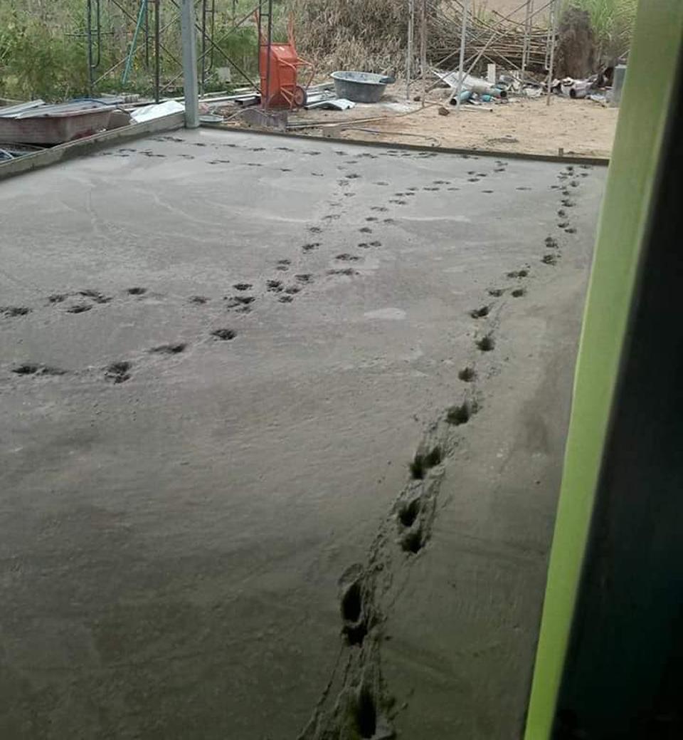 Chó cưng chạy trên nền bê tông mới đổ - 2