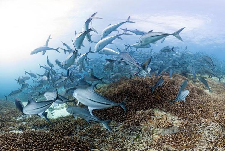 Cá đóng vai trò quan trọng trong việc cân bằng các nguồn carbon. Ảnh: Global Environment Facility.