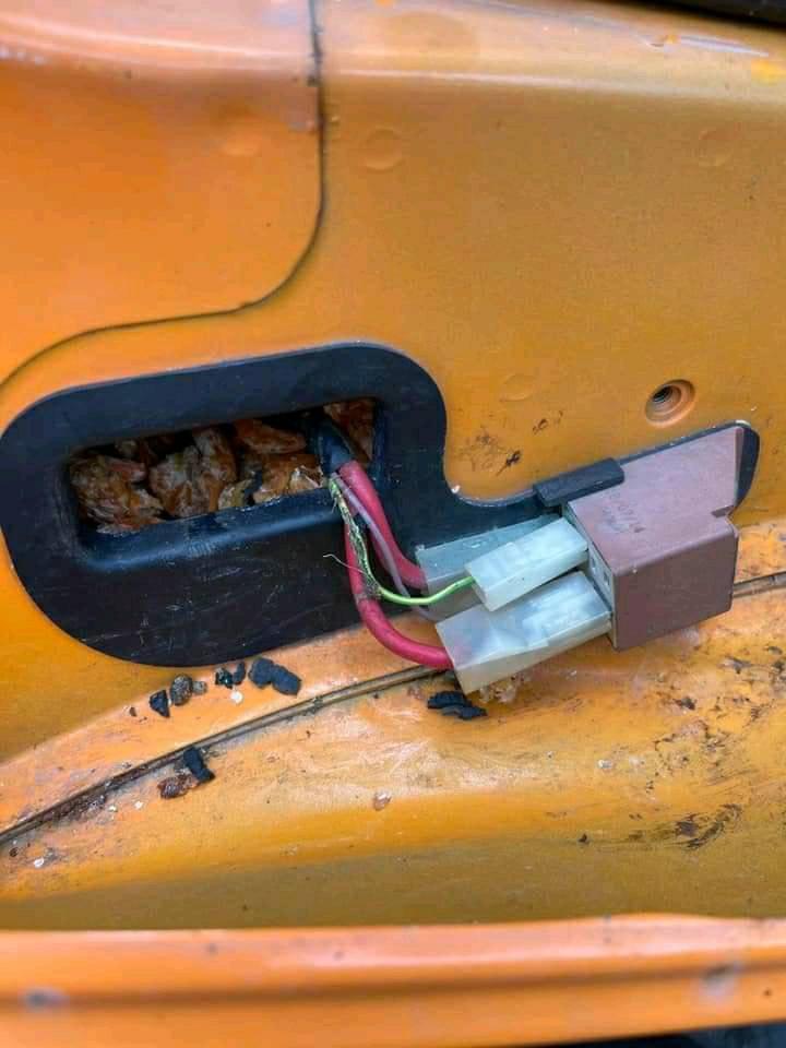 Rất nhiều tôm khô được gia chủ tìm thấy bên trong xe máy.