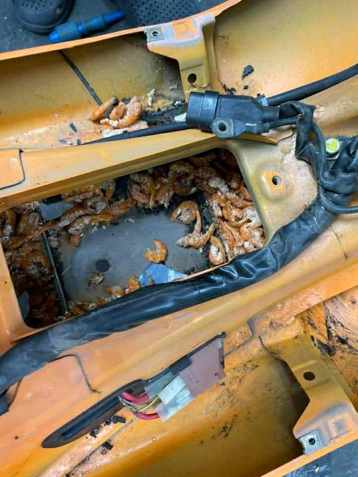 Chuột trộm tôm khô mang vào xe máy - 6