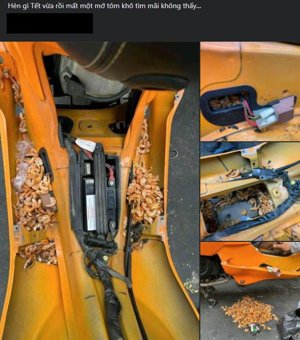 Tôm khô bị chuột trộm tha vào tổ trong xe máy.