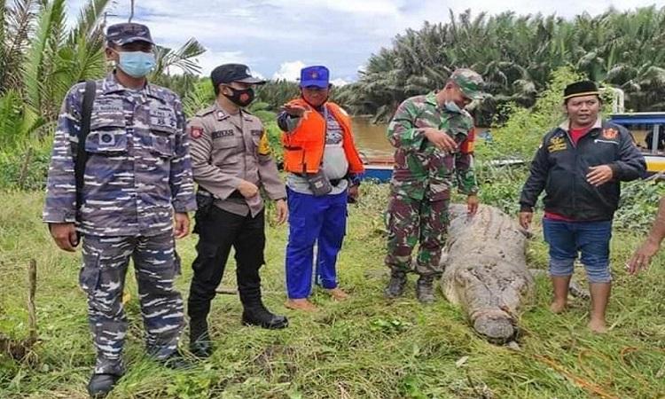 Nhân viên cứu hộ kéo con cá sấu lên bờ. Ảnh: Viral Press.