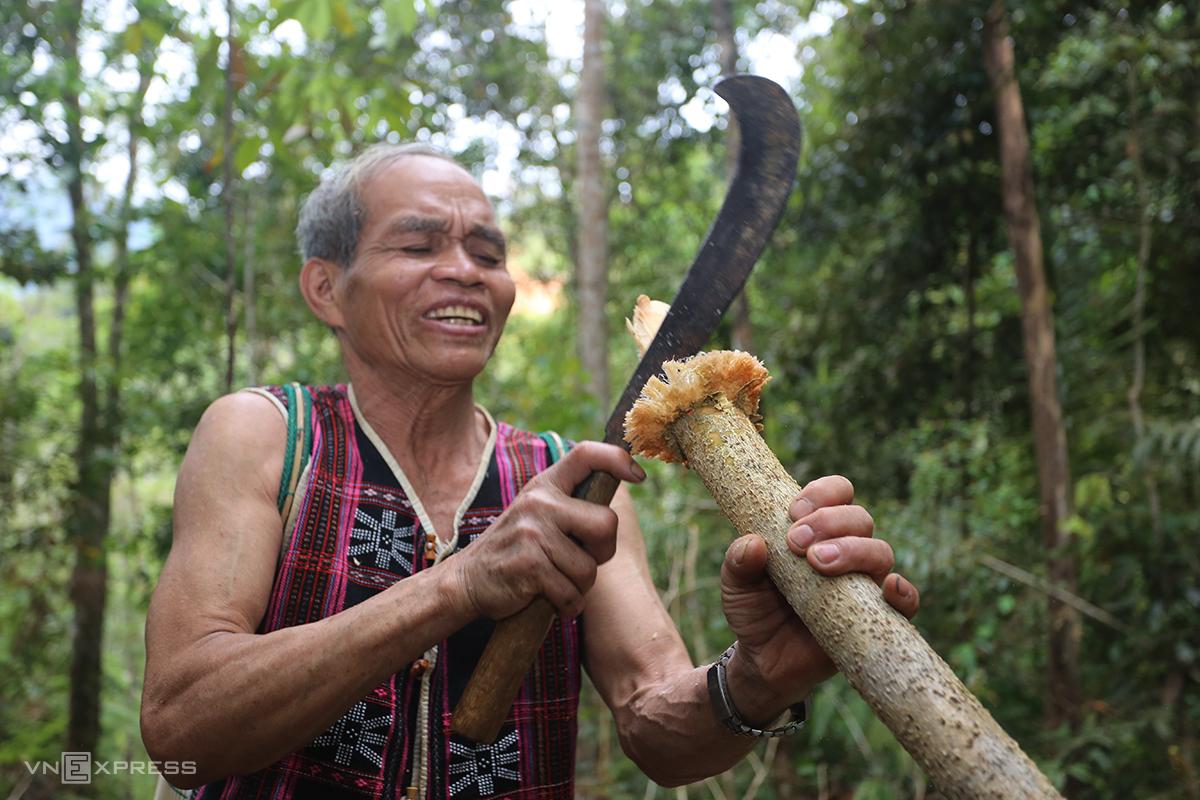 Ông C'lâu Blao bóc tách vỏ cây ra khỏi thân. Ảnh: Đắc Thành.