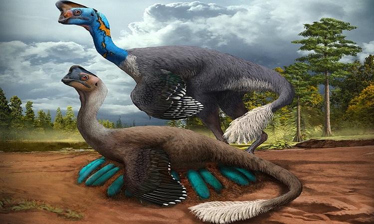 Phục dựng khủng long oviraptorosaur đang ấp trứng. Ảnh: Zhao Chuang.